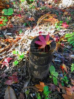 落葉と黄昏の写真・画像素材[2743351]