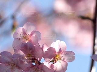 春の予感の写真・画像素材[2968833]