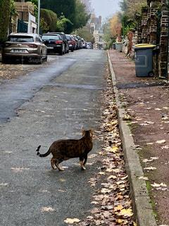 フランス小道の猫の写真・画像素材[1978527]
