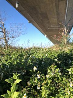 橋の下の野花の写真・画像素材[1981761]