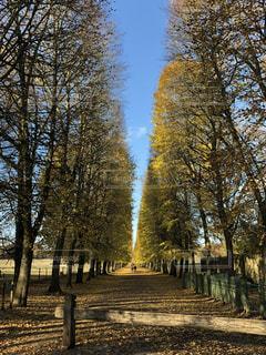 フランスの街路樹の写真・画像素材[1984300]
