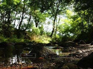 自然の写真・画像素材[74425]