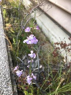小さくて可愛い花の写真・画像素材[2050977]
