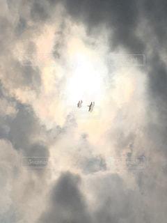 二羽のトンビの写真・画像素材[2051425]