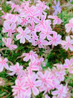 花の写真・画像素材[2021703]