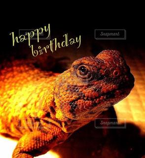 happy birthdayの写真・画像素材[2037703]
