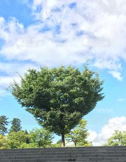 気になった木の写真・画像素材[2119957]