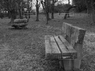 公園の写真・画像素材[1981741]