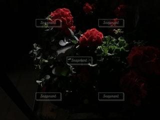 花の写真・画像素材[2143892]