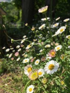 花の写真・画像素材[74658]