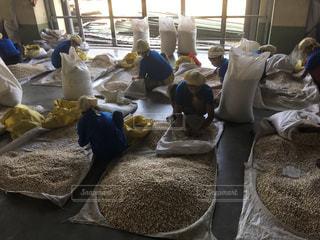 ミャンマーの倉庫で豆を選別する女性達の写真・画像素材[1983934]