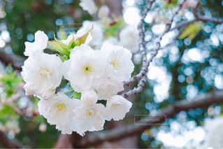 花の写真・画像素材[1983654]