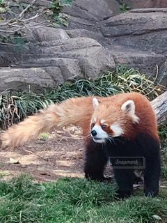 王子動物園の写真・画像素材[1983655]