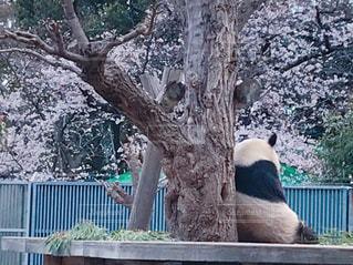 王子動物園の写真・画像素材[2008755]