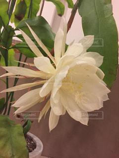 花の写真・画像素材[1994631]