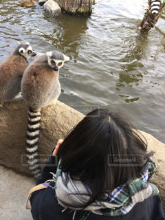 動物の写真・画像素材[2018488]