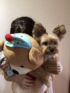 テディベアを抱いている犬の写真・画像素材[2088209]