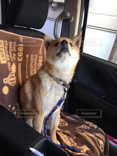 愛犬とドライブの写真・画像素材[2011196]