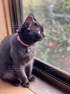 ネコの写真・画像素材[2690333]
