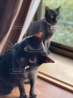 テーブルの上に座っている黒猫の写真・画像素材[2690334]