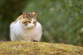 モデル野良猫の写真・画像素材[2002476]