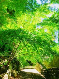 緑のトンネルの写真・画像素材[1990080]