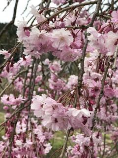 春の写真・画像素材[2022514]