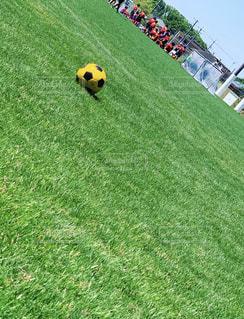 芝生にサッカーボール。このコントラスト好き。の写真・画像素材[2097668]