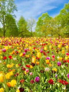 野原の黄色い花の写真・画像素材[2088318]