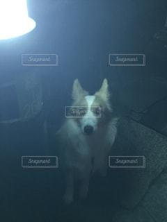 犬の散歩の写真・画像素材[1994902]