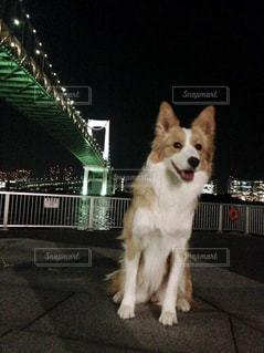 愛犬と散歩の写真・画像素材[1994980]