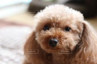 犬の写真・画像素材[75297]