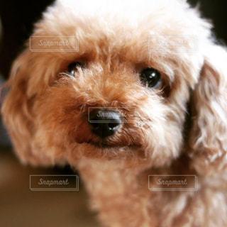 犬 - No.236326