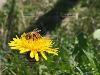 黄色い花の写真・画像素材[2095448]