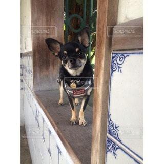 犬 - No.75825