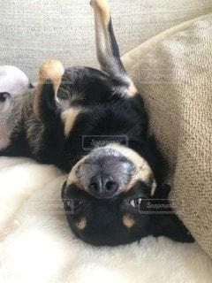 犬の写真・画像素材[83541]