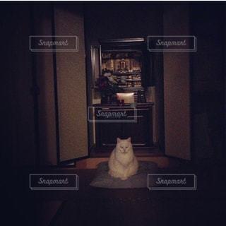 仏壇の前に座る白猫の写真・画像素材[2002088]