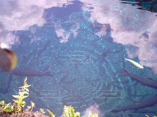 水の中の写真・画像素材[2063258]
