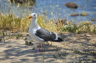 海鳥の写真・画像素材[2017876]