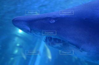 サメの写真・画像素材[2018284]