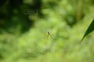 蜘蛛の写真・画像素材[2031322]
