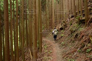 登山道の写真・画像素材[2042589]