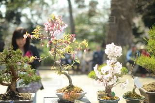 盆栽の写真・画像素材[2042657]