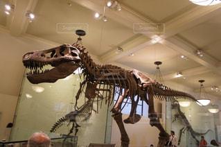ティラノサウルスの写真・画像素材[2056131]