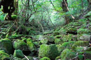 苔むす森の写真・画像素材[2058982]