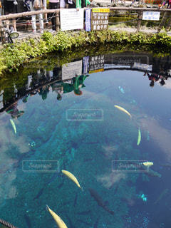 忍野八海の写真・画像素材[2064881]