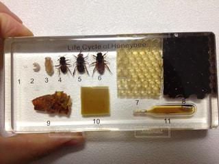 蜂の標本の写真・画像素材[2067376]