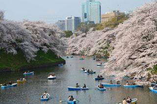 桜とボートの写真・画像素材[2072388]