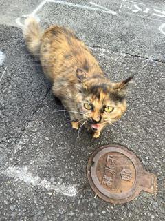 サビ猫の写真・画像素材[2011679]