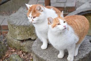 2匹の猫の写真・画像素材[2012890]
